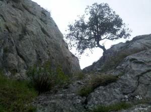 013 Peña Grande